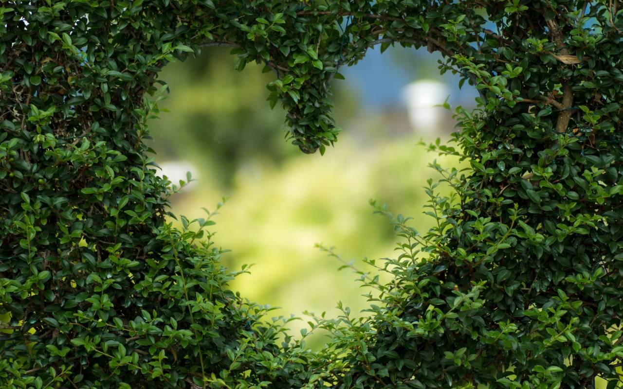 Mindfulness meditation on the heart